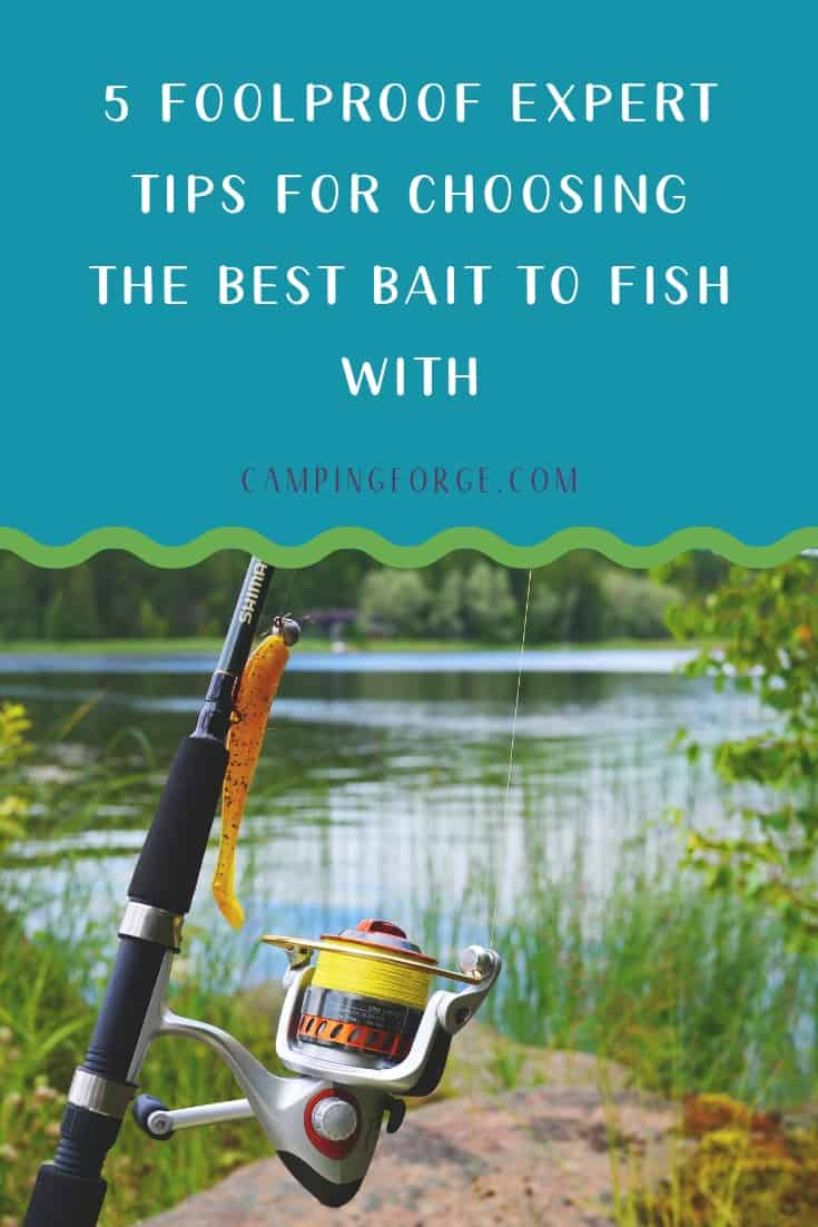 Pinterest image for 5 Foolproof Expert Tips For Choosing The Best Bait To Fish With