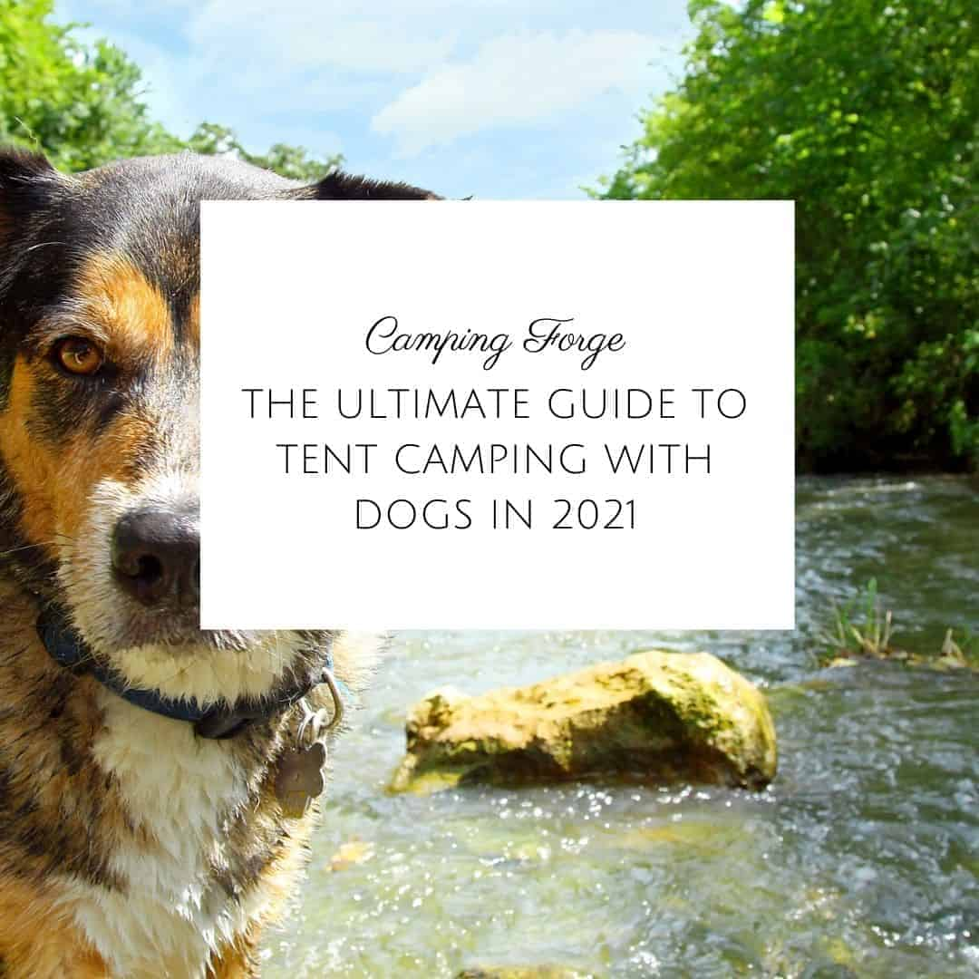 The Ultimate Guide To Tent Camping With Dogs In 2021